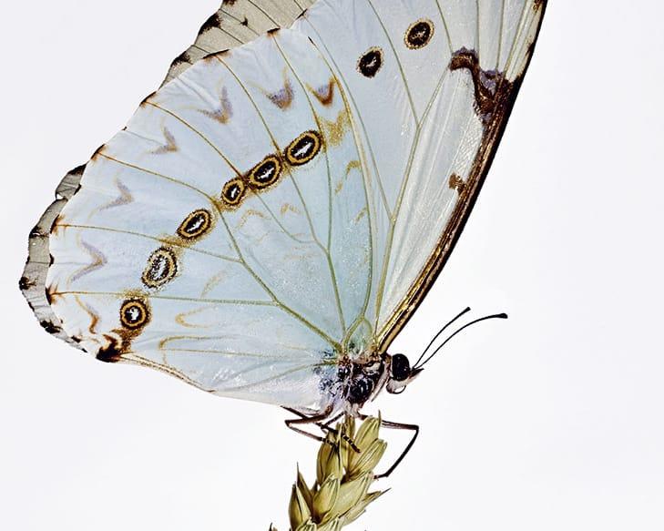 Accessoires, Gecko, papillon